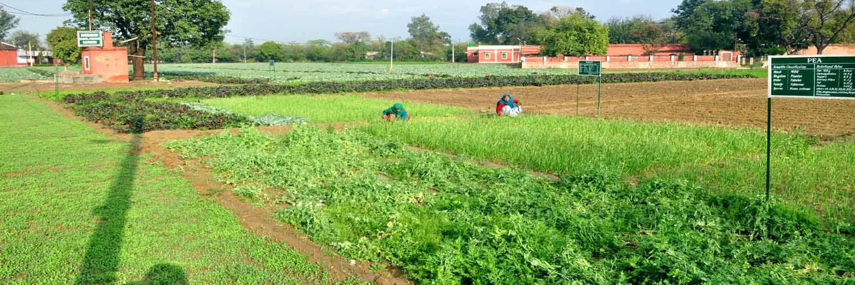 9 Agriculture Farm
